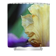 Tall Bearded Iris Named Final Episode Shower Curtain