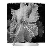 Tall Bearded Iris Named Saharan Sun Shower Curtain
