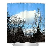 Tall Birch Shower Curtain