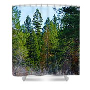 Tall  Shower Curtain
