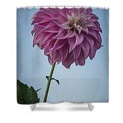 Tall Dahlia Shower Curtain