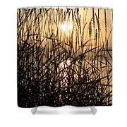 Tall Grass 1 Shower Curtain