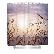 Tall Grass At Sunset Shower Curtain