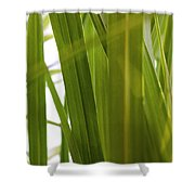 Tall Grass Shower Curtain