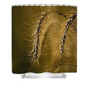 Tall Grass Summer's End Shower Curtain