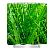 Tall Green Grass Shower Curtain