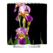 Tall Iris Shower Curtain