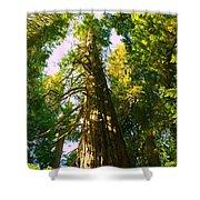 Tall Tall Trees Shower Curtain