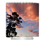 Tall Tree Against A Dramatic Sunset Clouds Sky Shower Curtain