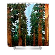 Tall Trees In Yosemite National Park Shower Curtain