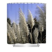 Tall Wispy Pampas Grass Shower Curtain