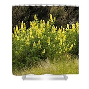 Tall Yellow Lupin Shower Curtain