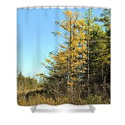 Tamarak Gold Shower Curtain