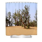 Tamarix Trees On Sand Dune  Shower Curtain by Dan Yeger