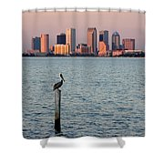 Tampa Skyline And Pelican Shower Curtain