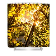 Tangled Flare Shower Curtain