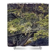 Tangled Neighbors Of The Lone Cypress Shower Curtain