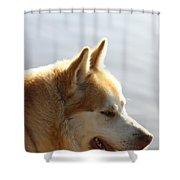 Tanka - Husky Shower Curtain