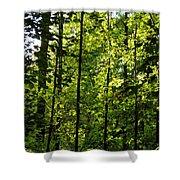 Tannehill Forest Shower Curtain
