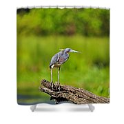 Tantalizing Tricolored Shower Curtain