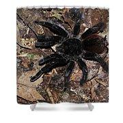Tarantula Amazon Brazil Shower Curtain