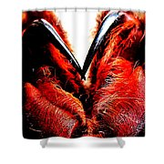 Tarantula Fangs Shower Curtain