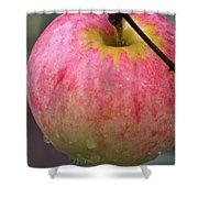 Taste Of Autumn Shower Curtain