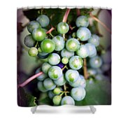 Taste Of Nature Shower Curtain