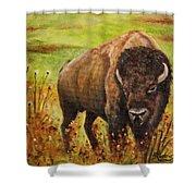 Tatanka, Buffalo  Shower Curtain