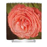 Tattered Rose Shower Curtain