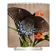 Tattered Tails Shower Curtain