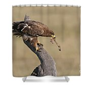 Tawny Eagle With Prey Shower Curtain