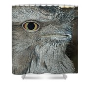 Tawny Frogmouth Shower Curtain