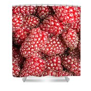Tayberries  Shower Curtain