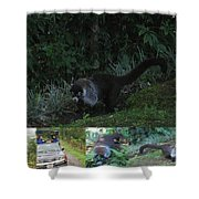 Tayra Costa Rica Animals Zoo Habitat Indigenous Population Mixing With Travellers Enjoying And Being Shower Curtain