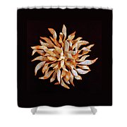 Tea And Honey Cookies Shower Curtain