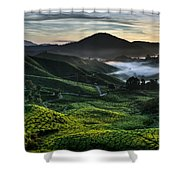 Tea Plantation At Dawn Shower Curtain