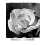 Tea Rose 01 - Infrared Shower Curtain