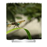 Teal Dragonfly Shower Curtain