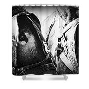 Team Work - Mules 2225-012-bw Shower Curtain