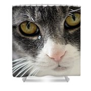 Tears Of A Cat Shower Curtain