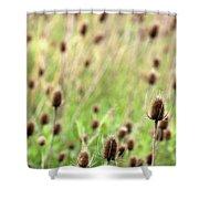 Teasel Meadow Shower Curtain