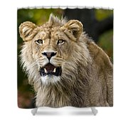 Teenage King Of The Beast Shower Curtain
