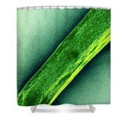 Tem Of Mycobacterium Tuberculosis Shower Curtain
