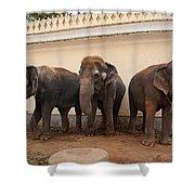 Temple Elephants Maharaja's Palace India Mysore Shower Curtain