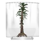 Tempskya Prehistoric Tree-like Fern Shower Curtain