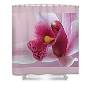Temptation - Pink Cymbidium Orchid Shower Curtain