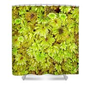 Tender Fresh Green Moss Background Texture Pattern Shower Curtain