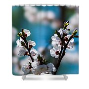 Tender Is The Day - Featured 3 Shower Curtain