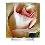 Tender Rose Bud Shower Curtain
